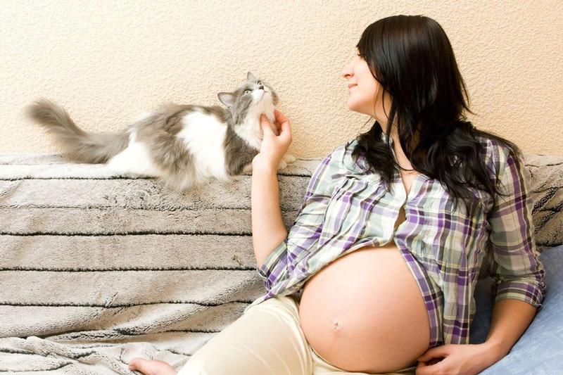 macska egysejtű parazita csecsemők helminthiasis, tünetek és kezelés