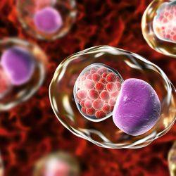 Chlamydia fertőzés és tünetei